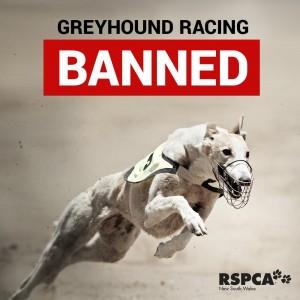 end greyhound racing